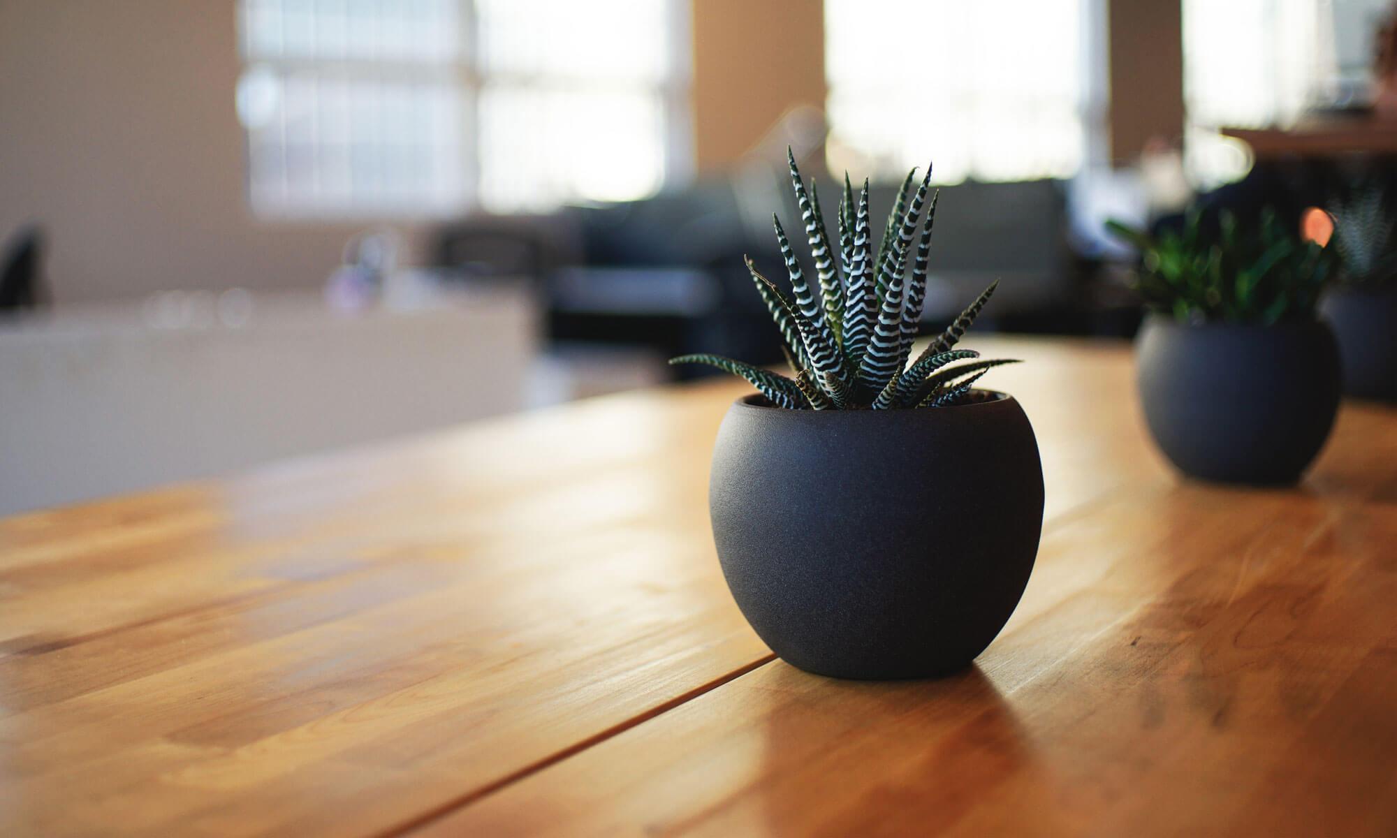Irodai növények